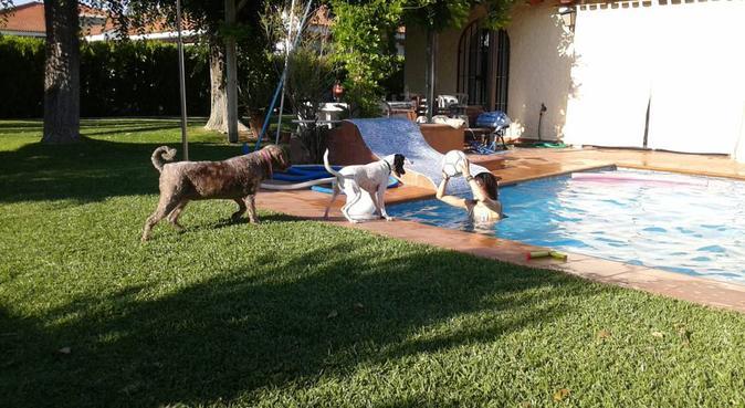 siempre uno mas de la familia, canguro en Sevilla