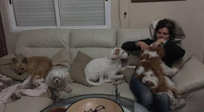 Cuidado y Cariño para tu Mascota, canguro en A Coruña