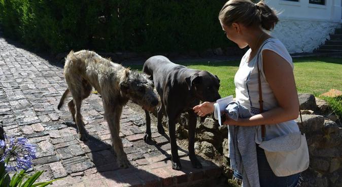 Hundgalen veterinärstudent i natursköna Rosendal, hundvakt nära Uppsala