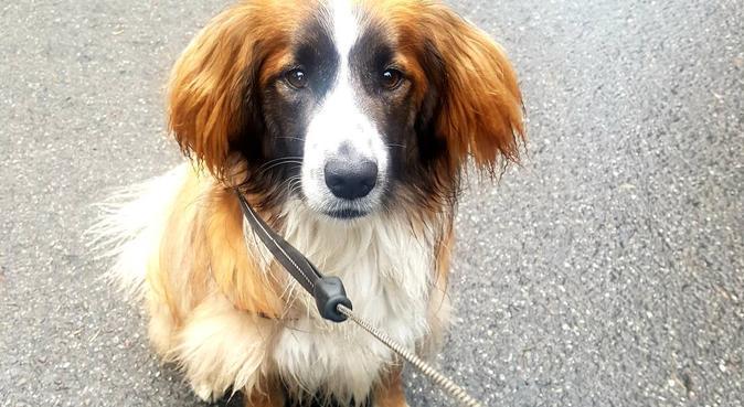 Hundälskande Kvinna i Torvalla., hundvakt nära Östersund