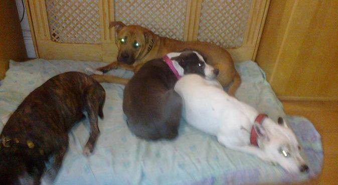 Jenny love and cuddles in sidcup kent, dog sitter in SIDCUP