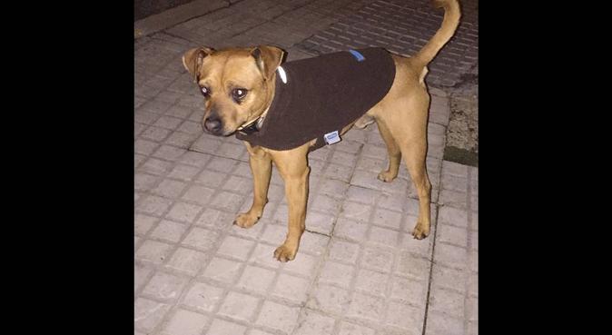 Cuidaré de tu mascota como si fuese la mía, dog sitter in Santa Eulalia del Río