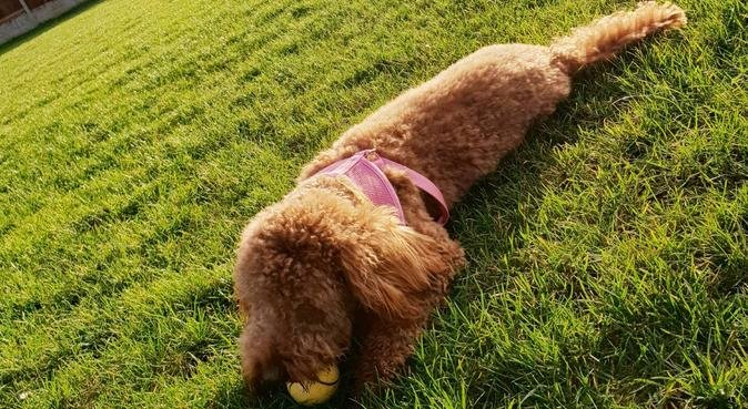 Big family home from home for all animals., dog sitter in Derby