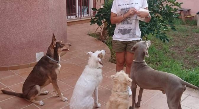 Casa vacacional 4 patas 🐕, canguro en Aguadulce