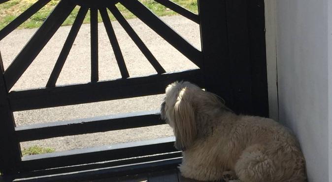 Ansvarsfull o flexibel hundpassning, hundvakt nära Växjö