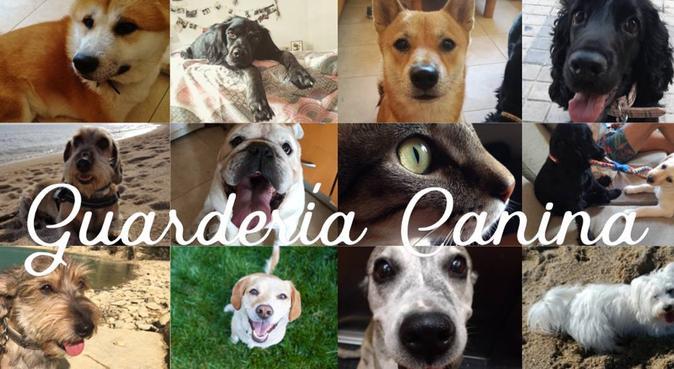 Guardería Canina Como en Casa, canguro en Barcelona