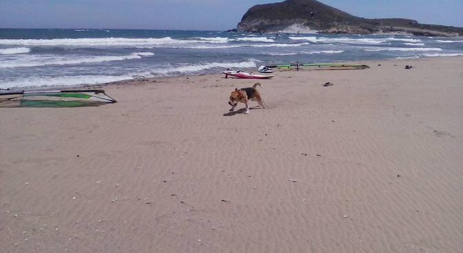 Amante de los animales- Disponible 24h-Negociable€, canguro en Almería