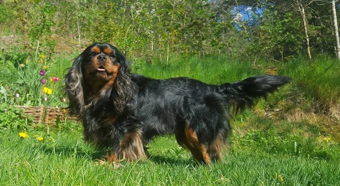 Härlig hundpassning på landet!, hundvakt nära Södertälje, Sverige