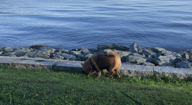 Turglad hundepasser, hundepassere i Trondheim