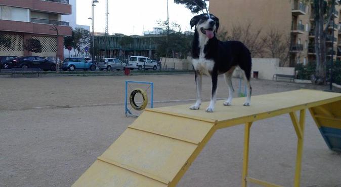Paseos DE VERDAD!, dog sitter in la linea de la concepción