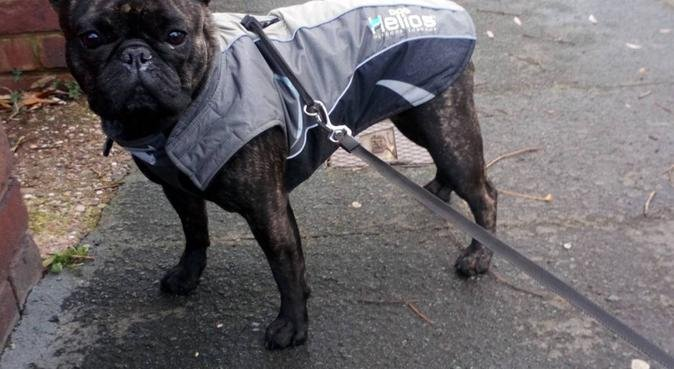 Mud & Mutts Dog Walking Great Barr, dog sitter in Birmingham