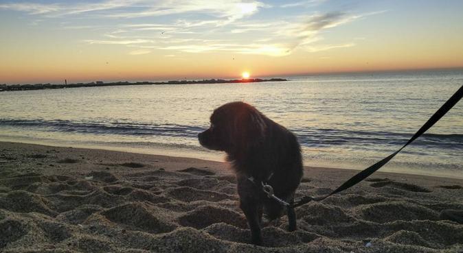 Como en las vacaciones en la playa!, canguro en Barcelona