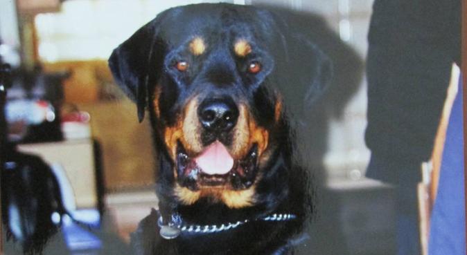 Walking - Caring - Feeding - Sitting - Talking, dog sitter in Loughton