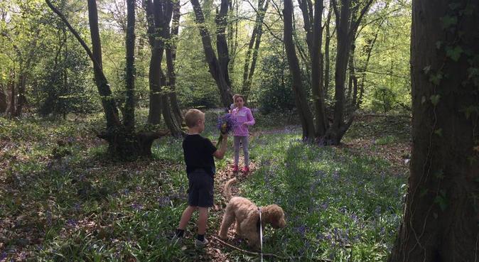 Fun & Cuddles with aunty Stephanie 🐶🐶, dog sitter in Abridge, UK