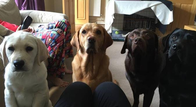 Bailey and Friends, dog sitter in Walsall
