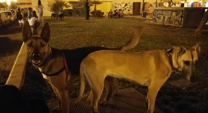 Dulce hogar... de maneras perrunas!, canguro en Sevilla