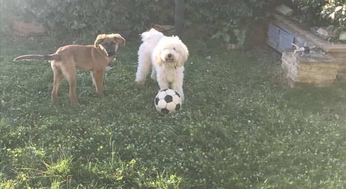 L'amour pour les chiens! Tutto per i miei adorati!, dog sitter a Perugia