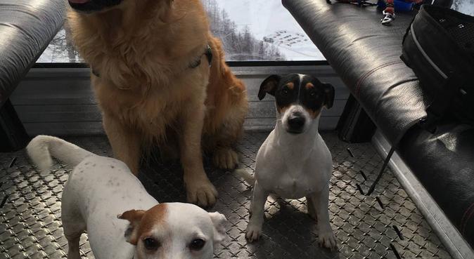 amour, sport et gratouilles !!, dog sitter à Issy-les-Moulineaux, France