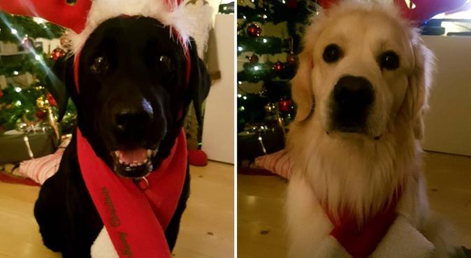 Masse kjærlighet søker hund 🐾🤗, hundepassere i Lørenskog