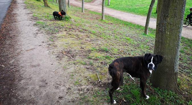 Nounous pour vos compagnons  :), dog sitter à Boulogne-Billancourt