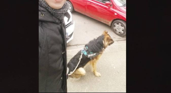 DogSitter con esperienza di oltre 3 anni, dog sitter a Florence