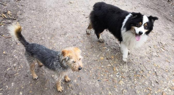 Balades, jeux et câlins, dog sitter à Issy-les-Moulineaux