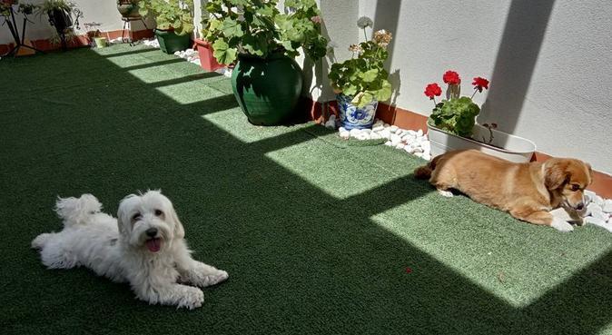Amantes de los perros, canguro en Sevilla