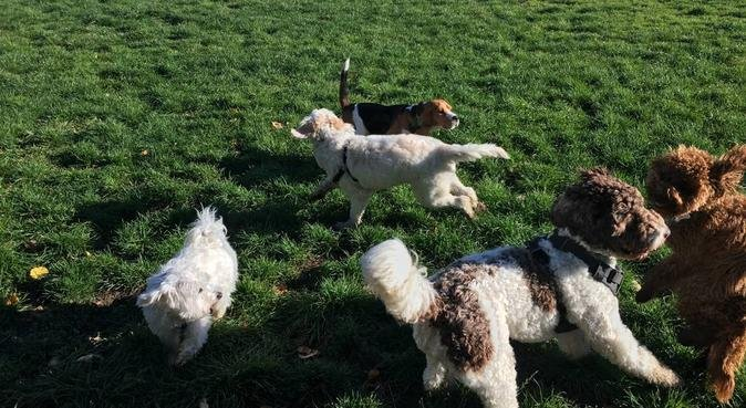 Hounds on the ground-pick up and drop off all bham, dog sitter in Birmingham