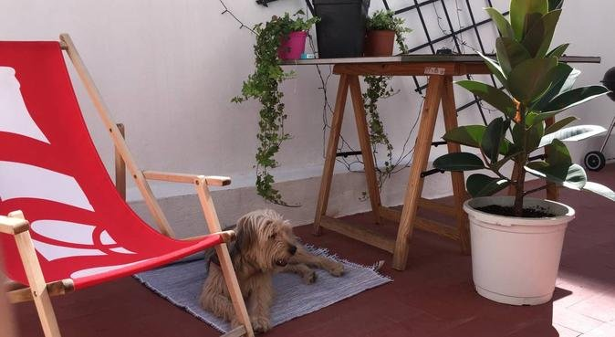 Fun & Care / Cuidado y diversión para los peludos., canguro en Benidorm, Spain