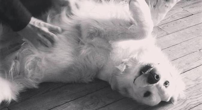 Pas le temps de s'ennuyer at Paula's resort, dog sitter à Nogent-sur-Marne