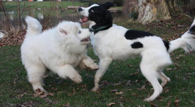 Le bien être de votre compagnon sera aussi le mien, dog sitter à Suresnes