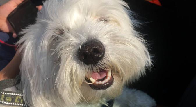 Passeggiate, giochi e relax con Ele, dog sitter a Milano