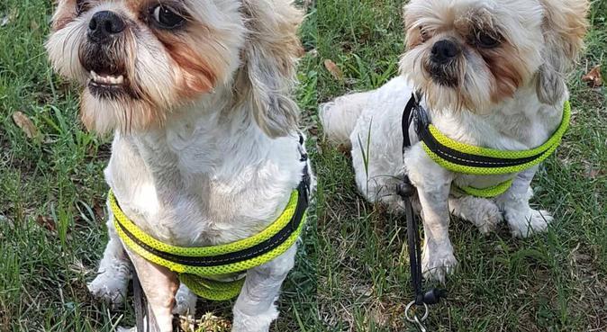 Instancabile lanciatrice di palline., dog sitter a Verona