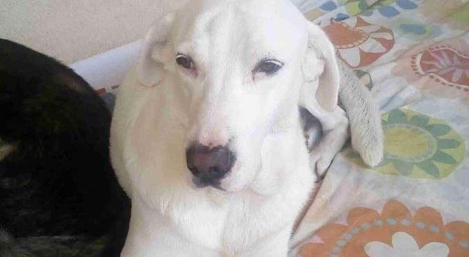 Affidabilità, sicurezza, coccole e divertimento, dog sitter a Brescia
