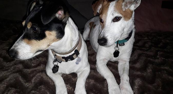 Dévouement exclusif a vos Boules d'Amour, dog sitter à Toulon