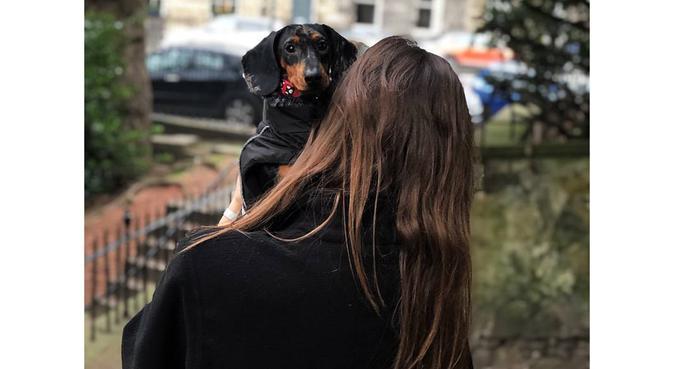 Your Doggie's City Escape, dog sitter in Edinburgh, UK