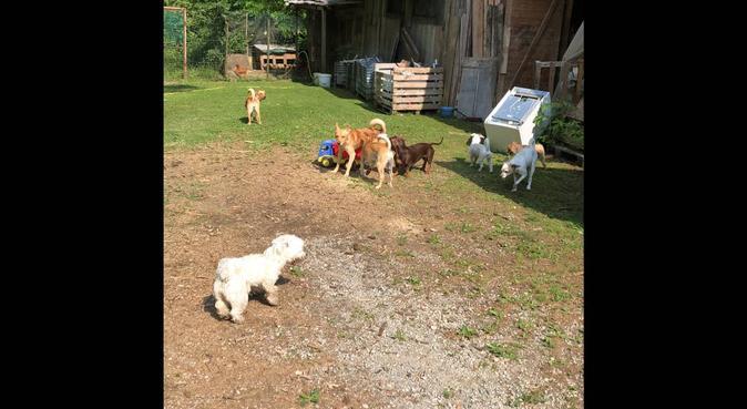 A spasso con desi, dog sitter a Villa di serio, BG, Italia