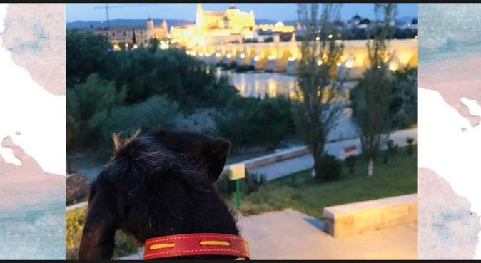 Si son únicos para tí, tambien para nosotros., canguro en Córdoba