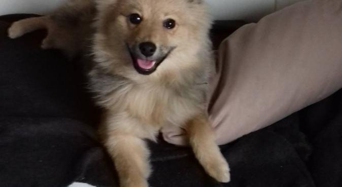 Beaucoup d'amour et d'attention pour vos animaux!, dog sitter à LYON 5EME ARRONDISSEMENT
