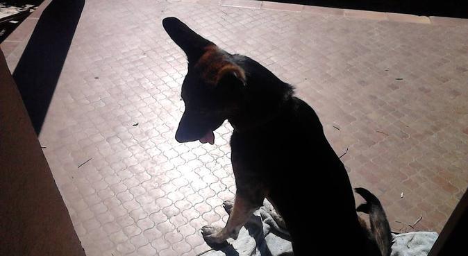 Garde pour boules de poils sur Lyon, dog sitter à Lyon