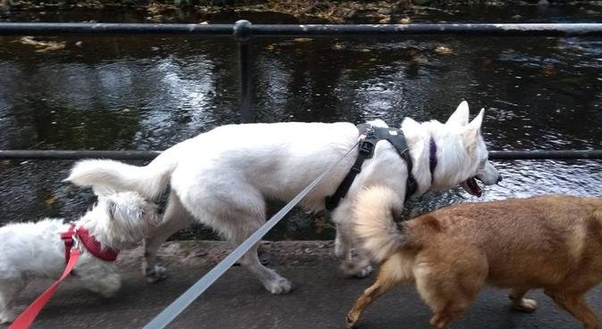 Care, adventures & lot of cuddles in Edi, dog sitter in Edinburgh