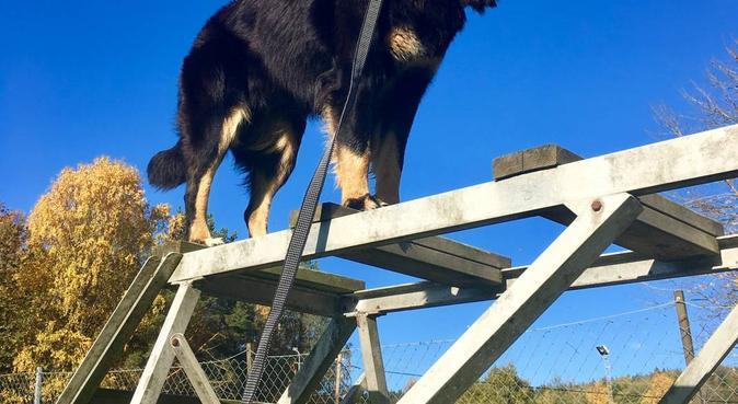 ÄHundälskare mellan egna hundar💕, hundvakt nära Kullavik
