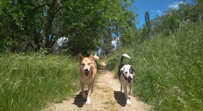 Le migliori cura per il tuo miglior amico!, dog sitter a Bari, Italia