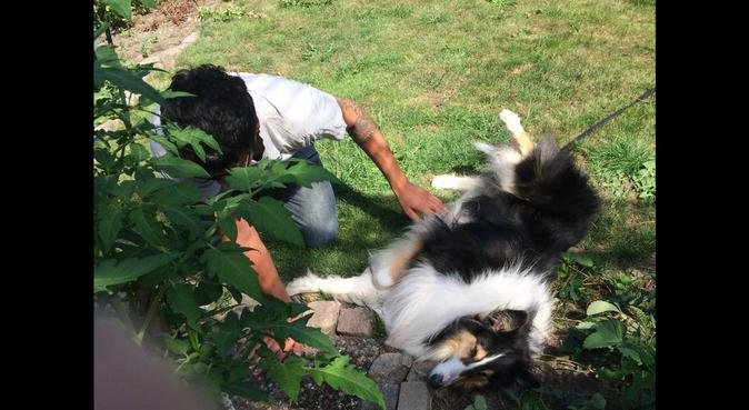 Kärleksfull hundpassning i Göteborg/Angered, hundvakt nära Angered
