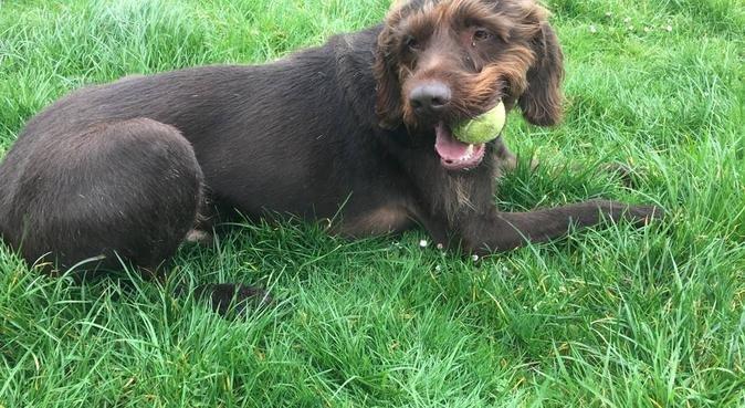 Manni's Mutts, dog sitter in Bournemouth, UK