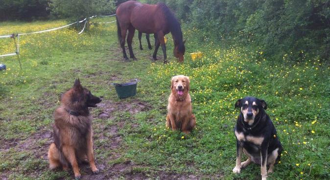 Des vacances au vert pour votre chien, dog sitter à vulaines sur seine