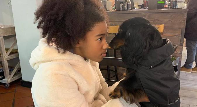 Tante coccole e gioco per il vostro amico 🐩, dog sitter a Mestre