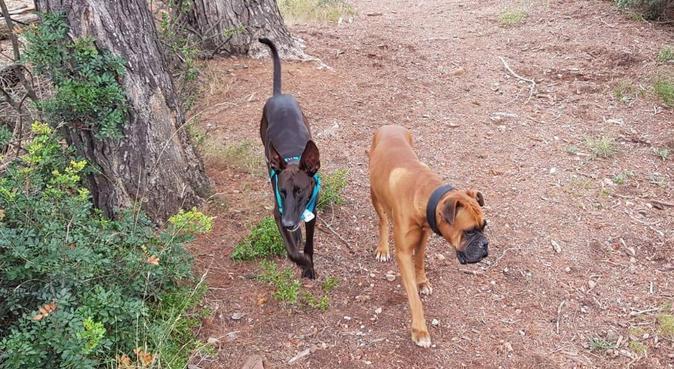 El bienestar de tu perro, ¡¡lo mas importante!!, canguro en Papiol