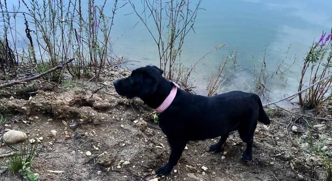 Au pays des bisous, dog sitter à Meyreuil