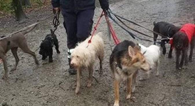 Lakritznasen Mettmann, Hundesitter in Mettmann